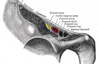 About Your Femoral Artery